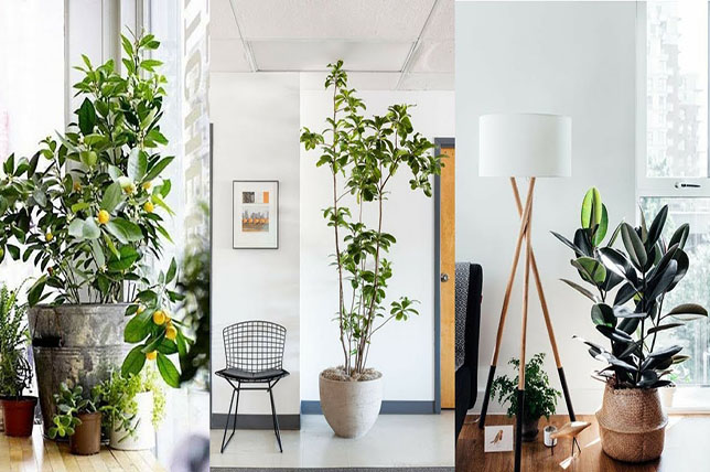 Собни растенија за почетници